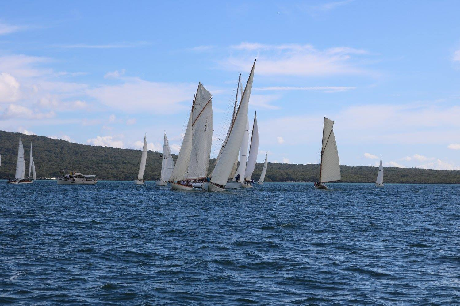 Classic yacht racing in the Waitemata Harbour